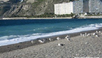 Playa de San Cristobal con gaviotas