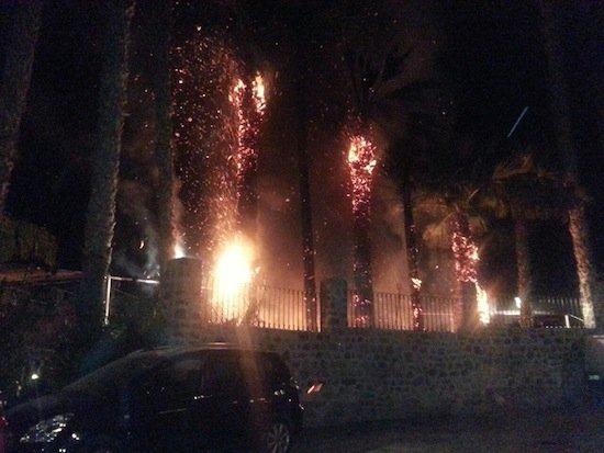 Palmeras ardiendo en El Parque El Majuelo de  Almuñecar