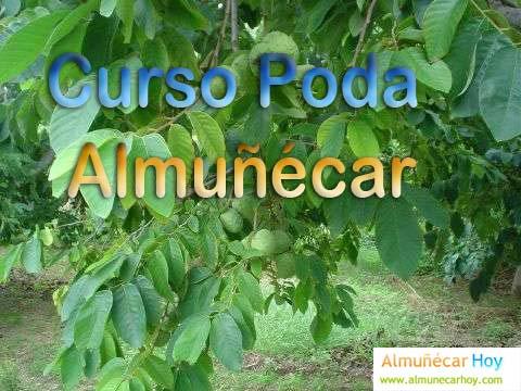 Curso de poda de subtropicales en Almuñécar